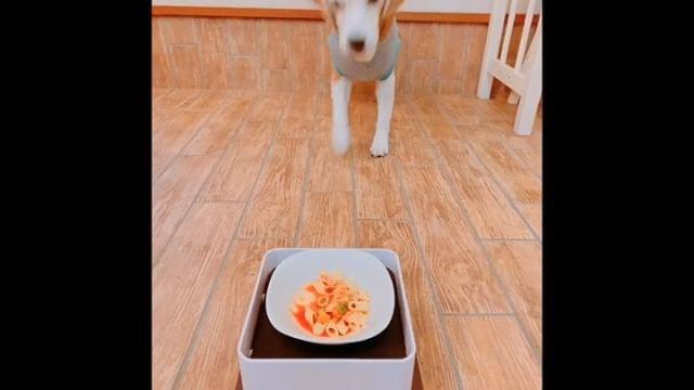 わんこ薬膳&お料理教室今日のメニューは鱈とトマトのペンネとパンプティングです。作っている時からソワソワしていた虎太郎も大喜びで完食でした!薬膳では鱈とトマトは「肝」をケアすると考えます。春は「肝」の季節です。なぜそう言われるのか?わんこ薬膳では詳しく、わかりやすくお伝えしております#わんこ薬膳#わんこの為のお料理教室#飼い主さんとシェアできる#ペット薬膳管理士#アニマルコミュニケーター sachiko#わんこのヒーリングスペースtalkwithcocoro (Instagram)