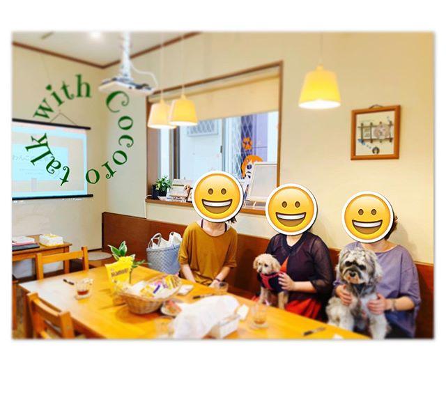 大切なわんこのために今日は 【わんこの健幸塾】を開催しました。ティータイムを楽しみながらわんこ話に花が咲きます大切な毛むくじゃらの家族。健康で幸せに過ごして欲しいのはみなさん、同じ思いです。その為に私たちが出来ることはたくさんあります️#わんこの健幸塾#わんこのヒーリングスペースtalkwithcocoro #毛むくじゃらの家族 (Instagram)