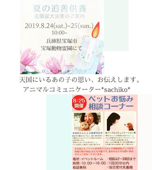 思いよ、届け8月25日 (日)兵庫県宝塚市にある宝塚動物霊園さまにてアニマルコミュニケーションをさせていただきます。天国にいるあの子今、一緒に暮らすこの子どの子も、あなたの大切な家族。大切な家族の思いをアニマルコミュニケーターsachikoがお届け致します。️費用は無料️手作りごはんのご相談も無料️しつけのご相談も無料️阪急、JR宝塚より無料送迎バス有り#宝塚動物霊園#夏の追善供養#盂蘭盆大法要#アニマルコミュニケーション#アニマルコミュニケーターsachiko (Instagram)