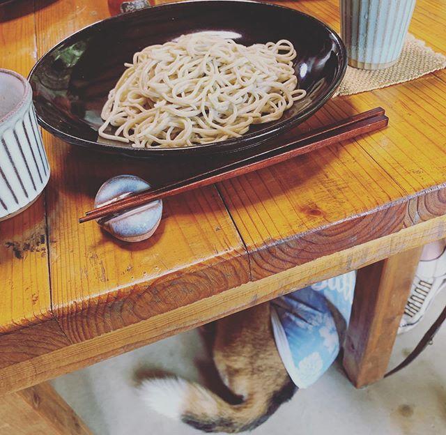 良い眺めコタも一緒に二八蕎麦を食べに来ました。可愛いおちりを眺めながら最高のランチタイム#犬との生活#犬とおでかけ#アニマルコミュニケーターsachiko (Instagram)
