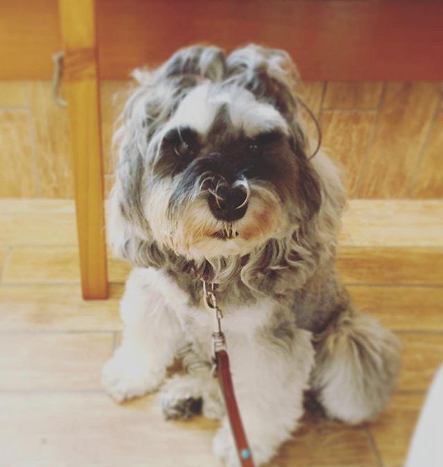🧐違いはナニ🧐飼い主さんがリードを持っていると他の人や犬に吠えるコです。私は仕事をするから机の下で待っててね。そんな気持ちでリードを持ちながら仕事の合間にパシャり。落ち着いた表情で待っていました。飼い主さんと私の違いは何でしょう⁇↓↓私のスタンスを伝えただけ。こんな時にもアニマルコミュニケーションが役に立ちますね#アニマルコミュニケーションtalkwithcocoro#アニマルコミュニケーション講座#ペットライフ#犬の気持ち#犬との暮らし#犬は家族 (Instagram)