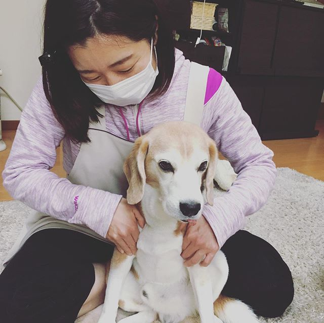 由貴先生はオレの…今日は歩くいぬさんの@inuseitai.kobe犬の整体DAYでした我が家の虎太郎も施術していただきました。由貴先生には身体を任せてリラックス整体のシメはお得意のポーズ由貴先生の膝に手を置いて由貴先生はオレの彼女だよ️コタさん…由貴先生は人妻です🤣#犬の整体#歩くいぬ#ペットのケア#ペットライフコミュニケーター#上恵野倖子 (Instagram)