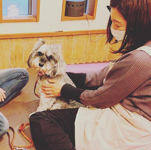 🤗仕事初め🤗犬の整体DAYから@inuseitai.kobe2020年がスタート1月は満員御礼2月2日は満員御礼2月19日は空きがございます。このコは大切な家族だから…そんな家族思いの飼い主さんの為にペットさんの為にtalk with Cocoroは今年も様々なイベントや講座を開催します2020年もよろしくお願いします#犬の整体#歩く犬#talkwithcocoro#ペットライフコミュニケーター#上恵野倖子 (Instagram)