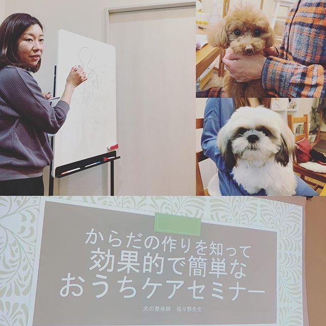 ごきげんになるよね今日は犬の整体師佐々野由貴先生による@inuseitai.kobe【からだの作りを知って効果的で簡単なおうちケアセミナー】でしたなぜコリか出来るのかシニアになるとお尻が落ちるわけマッサージ方法筋トレ方法 などなどわかりやすく説明していただきました️整体のビフォー、アフターの動画ではからだが動きやすくなってごきげんな様子のわんちゃんを見ました。みなさんも思わずニッコリ由貴先生ご参加くださった皆さまわんちゃん達ありがとうございました#歩くいぬ #犬の整体 #ペットライフコミュニケーター #上恵野倖子 (Instagram)