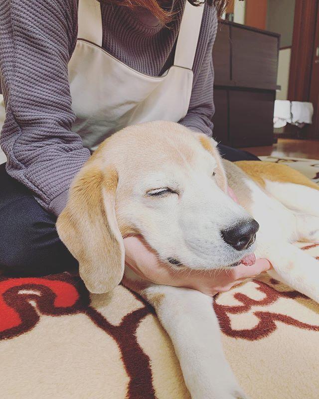 犬の整体DAY今日は犬の整体師@inuseitai.kobe由貴先生をお招きして犬の整体DAYを開催しています我が家の虎太郎もお願いしました。由貴先生のゴッドハンドに虎太郎も寝落ち…しかも由貴先生の手枕でスヤスヤ環境除菌口内ケアバイオレゾナンストリートメントレイキヒーリングマッサージの他にホームケアのひとつとして犬の整体を取り入れています。心と身体そして生活環境は繋がっています。命(life)と生活(life)をトータルで考え実践したいですね#犬の整体 #歩くいぬ #わんこのヒーリングスペースtalkwithcocoro #ペットライフコミュニケーター #上恵野倖子 (Instagram)